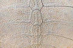 Background of tortoiseshell skeleton Royalty Free Stock Photos