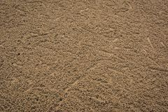 Background traces of small crabs on The Beach. Royalty Free Stock Photography