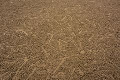 Background traces of small crabs on The Beach. Stock Image