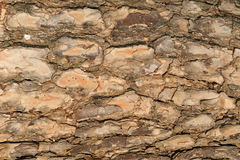 Background of tree bark. The image shows in detail part of the bark of a tree, could be used to create backgrounds or textures of various types and nature Stock Photos