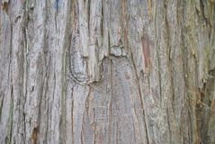 Background with tree bark Royalty Free Stock Images