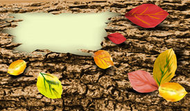 Background of tree bark with colorful autumn leave. Autumn banner with brown tree bark Royalty Free Stock Image