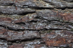 Background tree bark oak Stock Photography