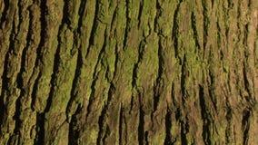 Background close up of tree bark. Background tree bark panning upwards stock video footage