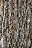 Background of tree bark texture. Background of old tree bark texture royalty free stock photography