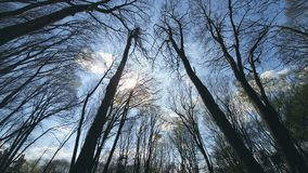 Background tree branches against the blue sky. View from bottom to top. Background tree branches against the blue sky. View from bottom to top stock video footage
