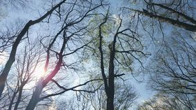 Background Tree branches against the blue sky. View from bottom to top. Background Tree branches against the blue sky. View from bottom to top stock footage