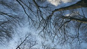 Background Tree branches against the blue sky. View from bottom to top. Background Tree branches against the blue sky. View from bottom to top stock video