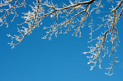 Background with tree branches in hoarfrost Stock Images