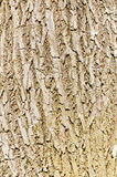 Background of tree cave texture Stock Photo