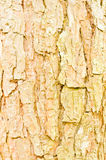 Background of tree cave texture Royalty Free Stock Images