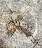 Background from tree cut Royalty Free Stock Photo
