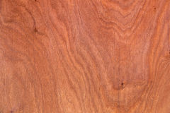 The background of a tree. Is shot close-up Royalty Free Stock Image