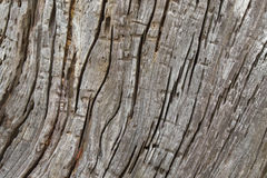 Background tree texture photo of huge rustic weathered wood bark Stock Images