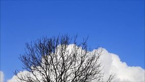 Background Tree in winter against white clouds and blue sky stock footage