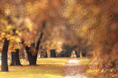 Background trees in autumn city park Royalty Free Stock Image