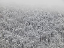 Background.  Trees on the mountain in the fog. Krasnaya Polyana, Sochi, Russia. January, 2015. Royalty Free Stock Images