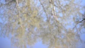Background trees reflected in water with ripples. On a sunny day with blue sky stock video