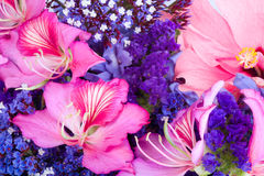 background of tropical flowers. Royalty Free Stock Photo