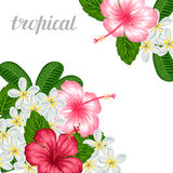 Background with tropical flowers hibiscus and plumeria. Image for holiday invitations, greeting cards, posters Stock Photo