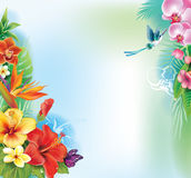Background from tropical flowers Stock Photos