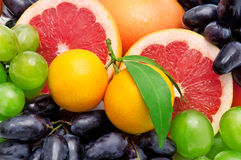Background of tropical fruit Stock Photography