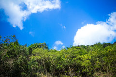 Background of tropical jungle on Koh Phangan Royalty Free Stock Photography