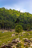 Background of tropical jungle on Koh Phangan Stock Images