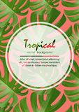 Background with tropical palm leaves. Exotic tropical plants. Stock Photo