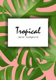 Background with tropical palm leaves. Exotic tropical plants. Stock Photos