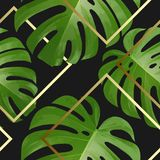 Background with tropical palm leaves. Exotic tropical plants. Royalty Free Stock Images