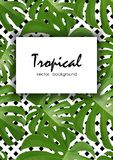 Background with tropical palm leaves. Exotic tropical plants. Royalty Free Stock Photos