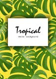 Background with tropical palm leaves. Exotic tropical plants. Stock Photography