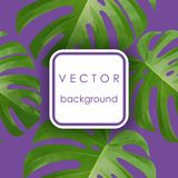 Background with tropical palm leaves. Exotic tropical plants. vector illustration