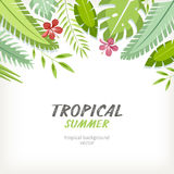 Background tropical Stock Image