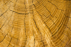 Background of a truncated tree trunk Royalty Free Stock Image