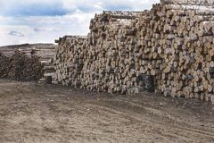 Background Trunks of trees cut and stacked in the foreground, green forest in the background Royalty Free Stock Images