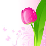 Background with tulip Stock Image