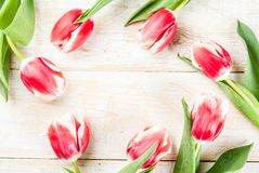 Background with tulip flowers. Background for congratulations, greeting cards. Fresh spring tulips flowers, on white wooden background top view copy space Stock Photo