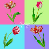 Background with tulips3-03 Royalty Free Stock Images