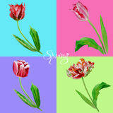 Background with tulips3-02 Stock Photo