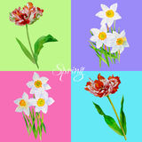 Background with tulips3-04 Stock Image
