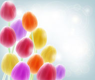 Background with tulips Royalty Free Stock Image