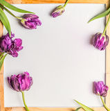 Background with Tulips flowers and water drops on blank white chalkboard Royalty Free Stock Image