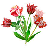 Background with tulips and roses-02 Stock Photos