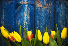 Background tulips spring flower wooden blue Royalty Free Stock Photo