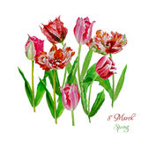 Background with tulips4-03 Stock Images
