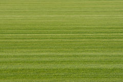 Background Turf Green Grass Royalty Free Stock Image