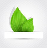 Background with two leaves Royalty Free Stock Photo
