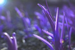 Background of ultra violet grass. stock photo